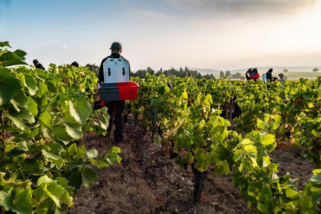 Opplev Paul Prieur & Fils på Bevaremegvel under Vinfesten