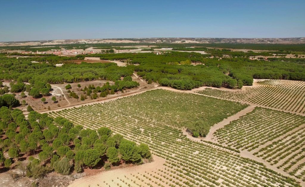 Spanias beste viner: Bodegas Mauro & Bodegas Maurodos   Nick & Jonnies (Gaffel&Karaffel)